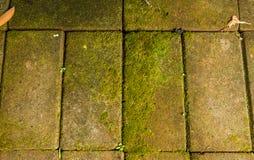Musgo nos tijolos Foto de Stock Royalty Free