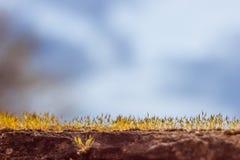 Musgo que crece en las rocas Fotos de archivo