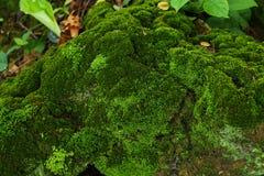 Musgo que cresce acima na rocha Imagem de Stock Royalty Free
