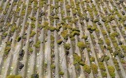 Musgo que cresce no telhado velho Fotos de Stock