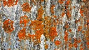 Musgo rojo Textura Imagen de archivo