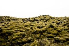 Musgo sobre flujo de lava en Islandia Musgo verde islandés que crece sobre rocas de una lava vieja imagen de archivo