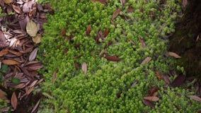 Musgo verde almacen de metraje de vídeo