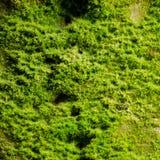 Musgo verde Foto de archivo libre de regalías