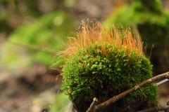 Musgo verde fotografía de archivo libre de regalías