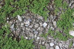 Musgo verde Imagem de Stock Royalty Free