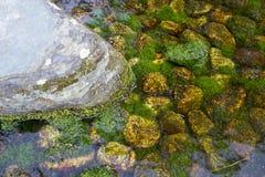Musgo verde Imagens de Stock Royalty Free