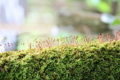 Musgo verde Imagenes de archivo