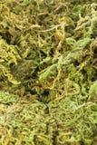 Musgo verde Imagen de archivo libre de regalías