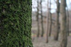 Musgo verde Fotos de archivo libres de regalías