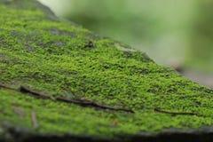 Musgo verde Fotos de archivo