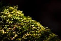 Musgo verde abstrato Foto de Stock