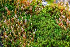Musgo verde bonito na floresta úmida, Tailândia imagens de stock