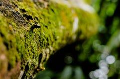 Musgo verde claro en árbol Imagen de archivo