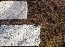 Musgo verde con las tejas de piedra fotos de archivo libres de regalías