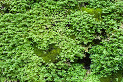 Musgo verde crecido encima de la cubierta las piedras ásperas en el bosque Foto de archivo libre de regalías