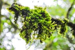Musgo verde em fundo defocused do bokeh Imagens de Stock