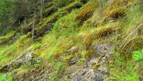 Musgo verde en el bosque metrajes