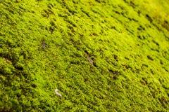 Musgo verde en el foco selectivo para la textura del fondo Imagenes de archivo