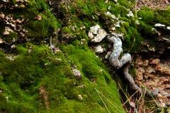 Musgo verde en el Spring Hill Imagenes de archivo