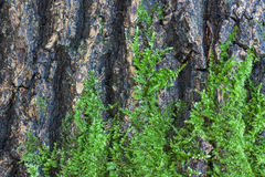 Musgo verde en la corteza de un árbol Fotografía de archivo libre de regalías