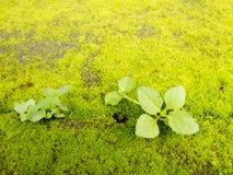 Musgo verde en la tierra con la planta Foto de archivo libre de regalías