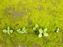 Musgo verde en la tierra con la planta Fotografía de archivo