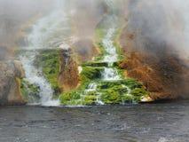 Musgo verde en las caídas termales Imagen de archivo libre de regalías