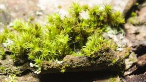 Musgo verde en macro de la corteza con el fondo del bokeh, foco selectivo Foto de archivo libre de regalías
