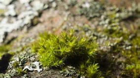 Musgo verde en macro de la corteza con el fondo del bokeh, foco selectivo Imágenes de archivo libres de regalías