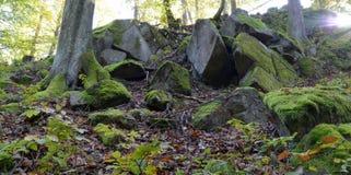 Musgo verde en rocas y árboles en el bosque Foto de archivo libre de regalías