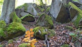 Musgo verde en rocas y árboles en el bosque Imagenes de archivo