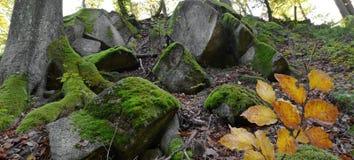 Musgo verde en rocas y árboles en el bosque Foto de archivo