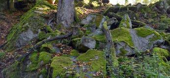 Musgo verde en rocas y árboles en el bosque Fotografía de archivo