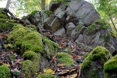 Musgo verde en rocas y árboles en el bosque Imágenes de archivo libres de regalías