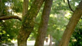Musgo verde en troncos de árbol en foco Parque borroso del verano con la gente que camina en el fondo metrajes