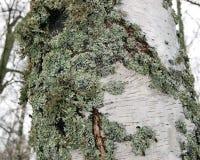 Musgo verde en un árbol Fotografía de archivo