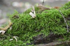 Musgo verde en una corteza de árbol Foto de archivo libre de regalías