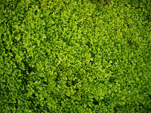 Musgo verde, fondo de la hierba Fotos de archivo libres de regalías