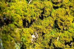 Musgo verde, iluminado pelos raios do sol da mola Textura, fundo e cor naturais da superf?cie natural org?nica fotos de stock royalty free