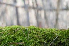 Musgo verde mullido en fondo borroso Fotos de archivo