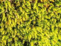Musgo verde na floresta imagem de stock royalty free