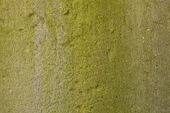 Musgo verde natural en el cemento de tierra Fotografía de archivo