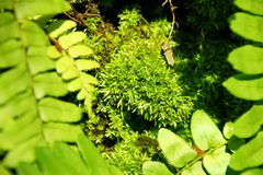 Musgo verde que se pega a un ?rbol imagenes de archivo