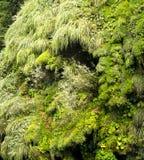 Musgo verde um fundo detalhado imagem de stock