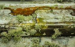 Musgo y algas que crecen en el barco Imagen de archivo libre de regalías