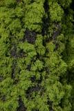 Musgo y corteza del árbol Fotografía de archivo libre de regalías