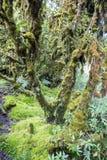 Musgo y helecho en la selva tropical Fotos de archivo libres de regalías