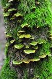 Musgo y hongos del primer Foto de archivo libre de regalías
