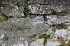 Musgo y ladrillos Fotos de archivo